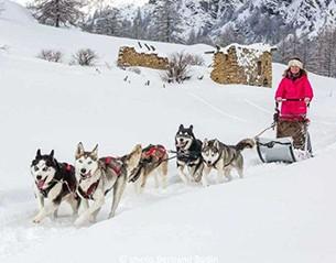 Dogs sledding