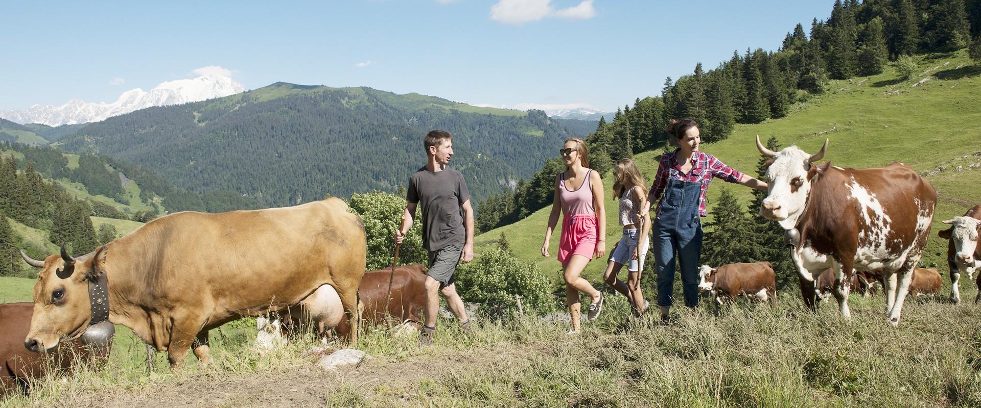 Agriculture-alpage-Aravis