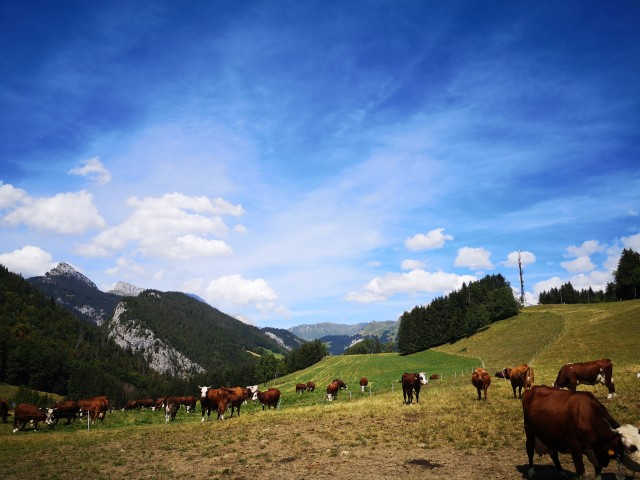 vaches-846