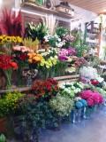 08-fleurs-coupees-papillon-creation-48667